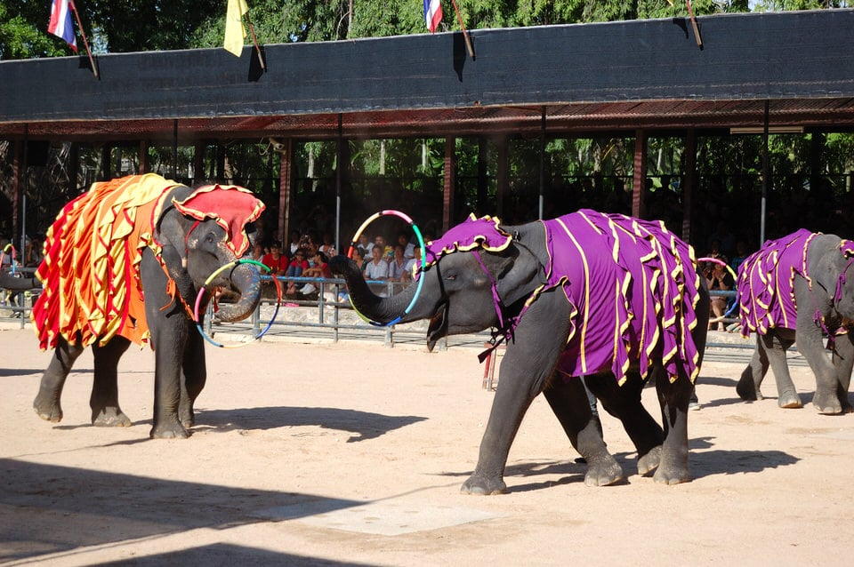 The Elephant Show at Nong Nooch Pattaya