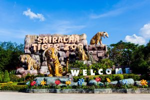 Sriracha Tiger Zoo Pattaya