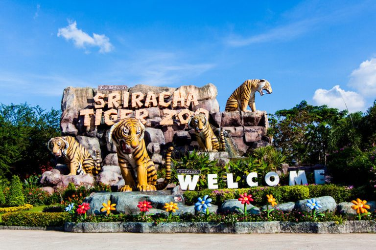 Sriracha Tiger Zoo (Pattaya)