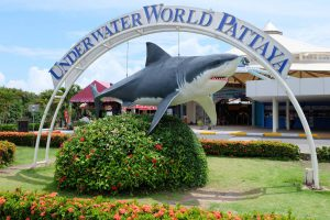 Underwater World Pattaya Shark