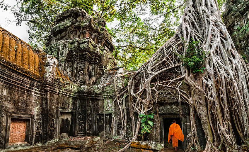 Buddhist monk walking into the Ta Prohm temple under a banyon tree.